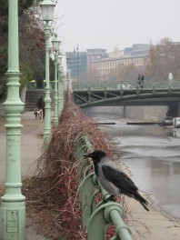 A Bird on a Bridge in Vienna